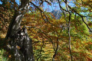 Il bosco sulle pendici di Serra del Finocchio. Ph F. Bevilacqua