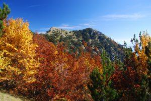 Il crinale di Montea visto da Serra del Finocchio. Ph F. Bevilacqua
