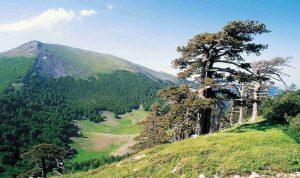 Un'immagine del Parco nazionale del Pollino che, secondo Nicoletti, ha un'ottima governance. Nella foto del primo piano, un'immagine del Parco nazionale del Gran Paradiso.