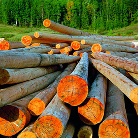 filiera legno-foresta